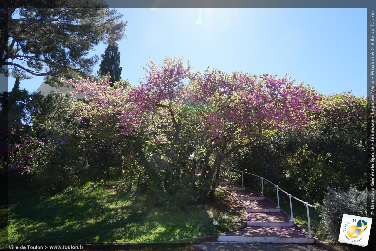Arbre pour petit jardin ville brest 11 for Arbre pour petit jardin