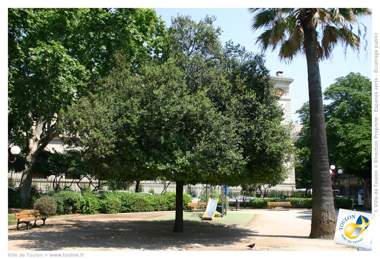 Le ch ne vert site officiel de la ville de toulon for Jardin du pic vert