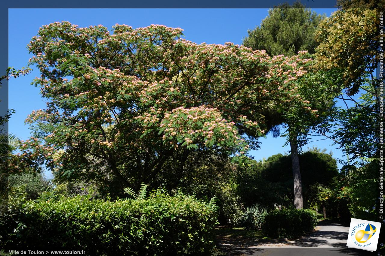 L 39 arbre de soie site officiel de la ville de toulon - Arbres de jardin ...