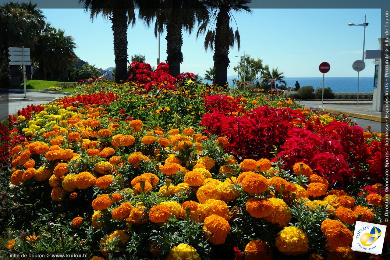 Toulon en fleurs site officiel de la ville de toulon for Site de fleurs